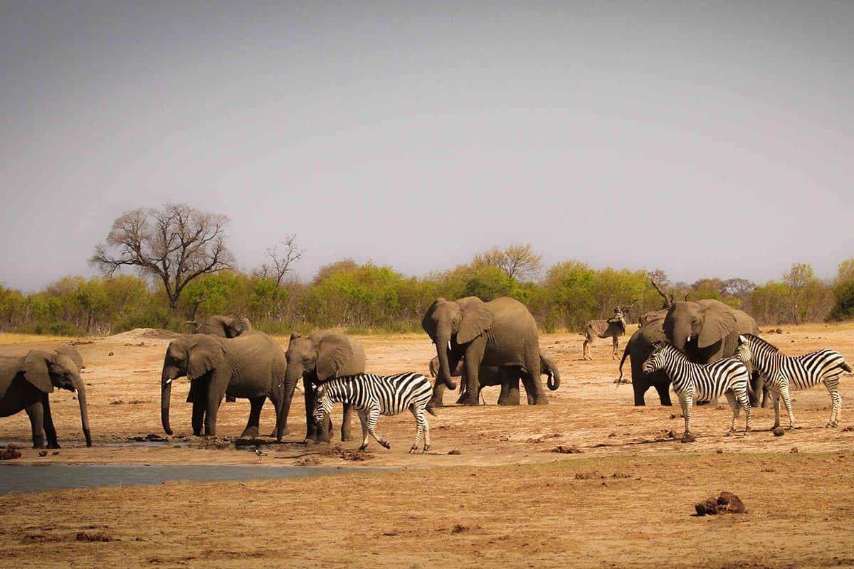 Classic Hwange Safari